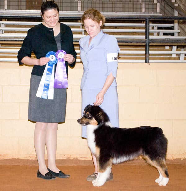 Cam - ASCA Winner's Dog and Best of Winners - FL Pan-Handlers ASC, INC.