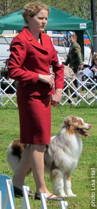 Cider AKC Groups Newnan, GA